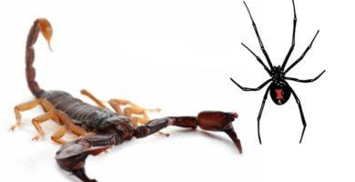 Soñar con alacranes y arañas