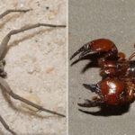 Soñar con alacranes y arañas en mi casa