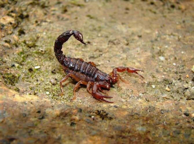 Significado de soñar con escorpiones