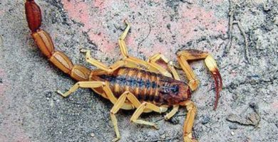 Sueños con escorpiones