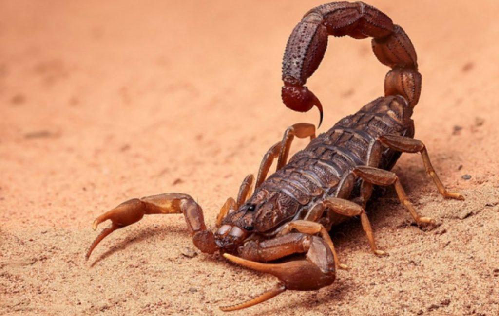 que significa sonar con escorpiones