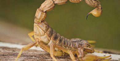 soñar con escorpion